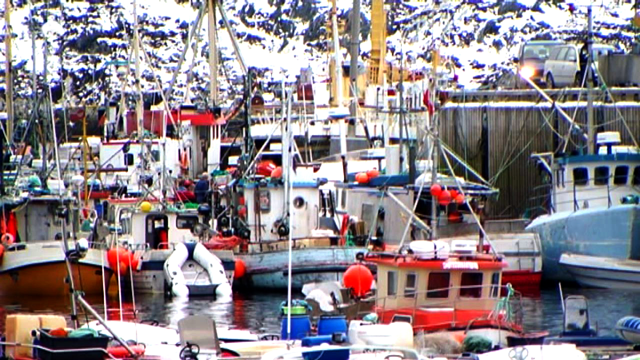 Kystfiskere afhængige