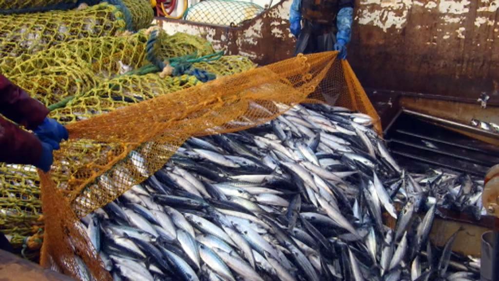 Makrel til islændinge