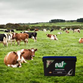 mineral, mineral buckets, livestock minerals, vitamins, supplements, dairy, cow, beef, sheep, ewe, l