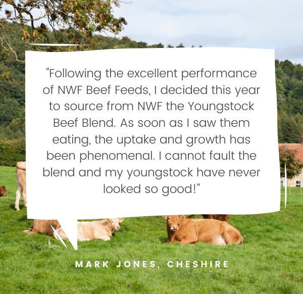 NWF Testimonial - Mark Jones