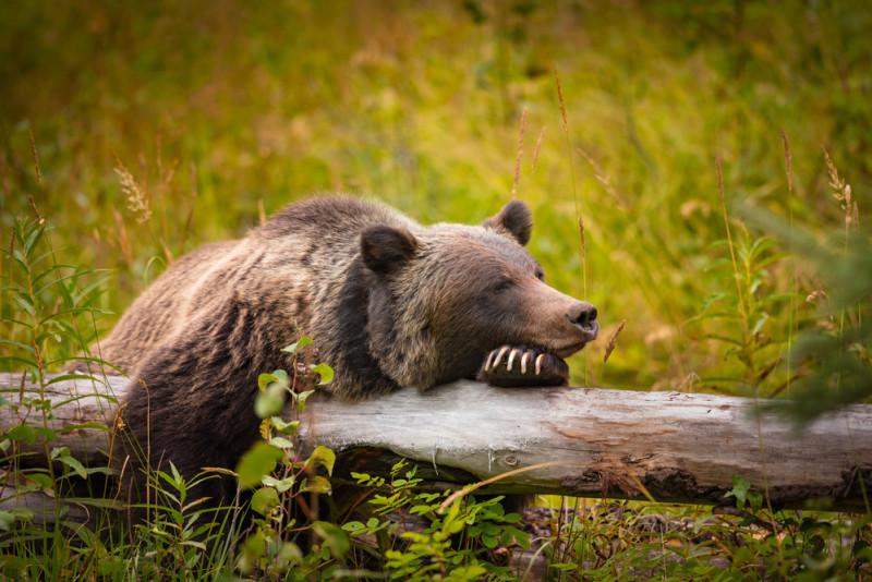 10 parchi con animali in Lombardia