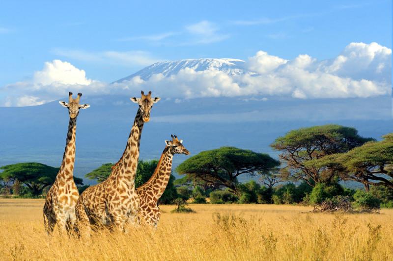 10 cose da non perdere in Kenya