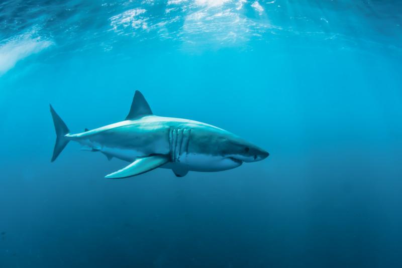 Mari a maggiore rischio squali