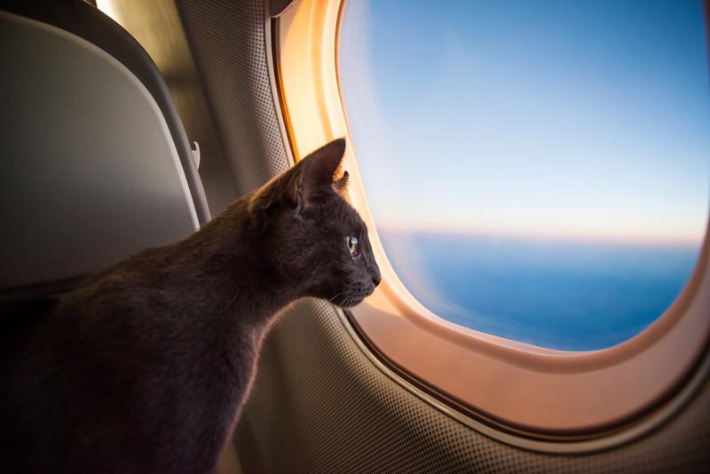 Come viaggiare con un gatto in aereo