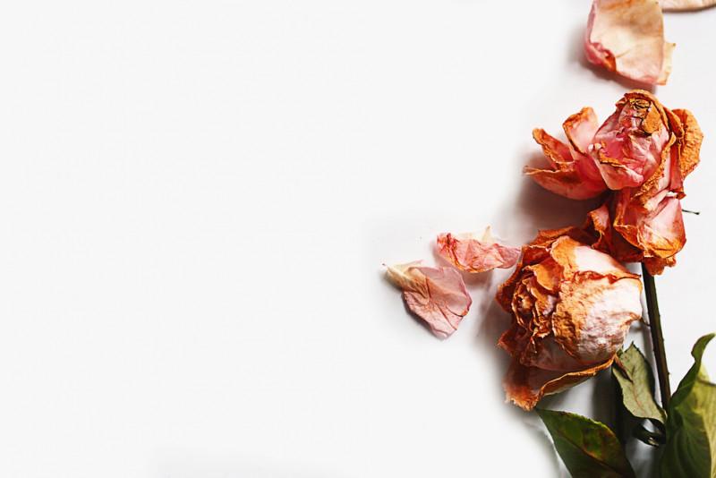 Come far seccare una rosa