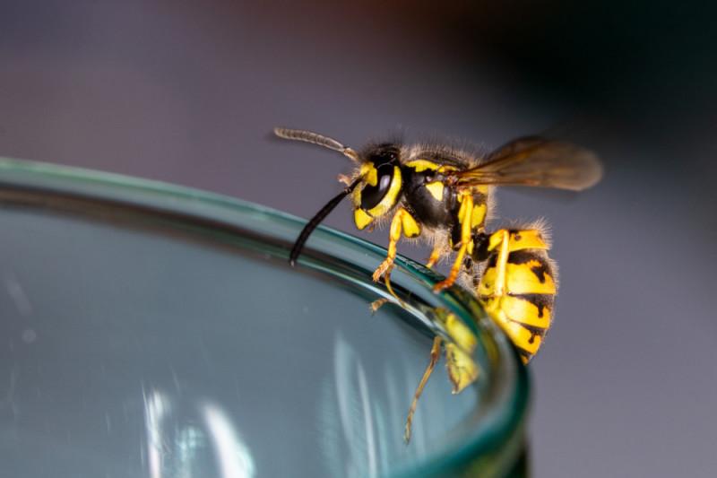Come allontanare api e vespe