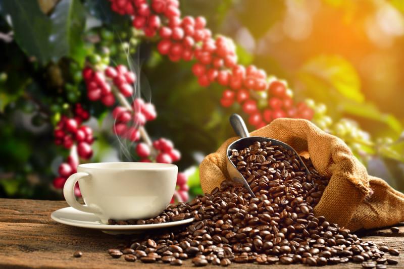 Come coltivare la pianta del caffè in vaso