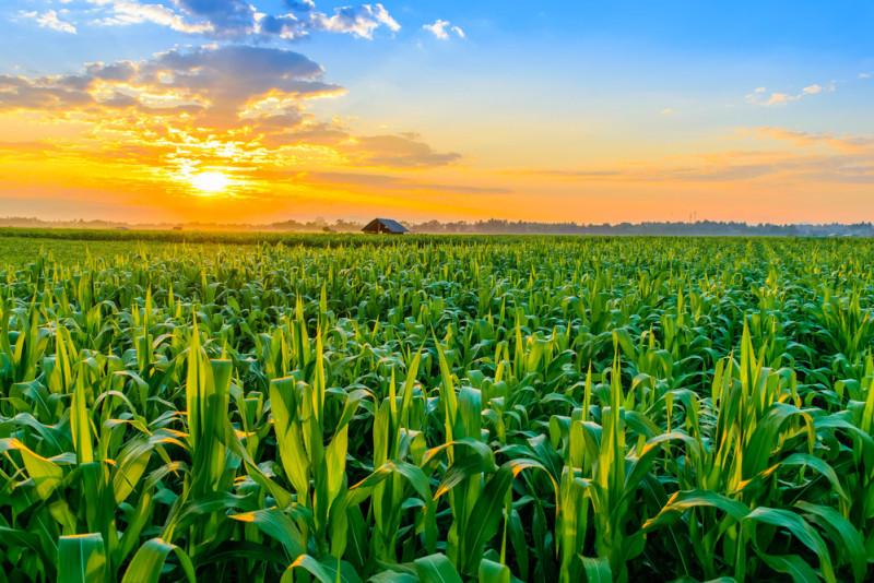 Come quantificare il valore di un terreno agricolo