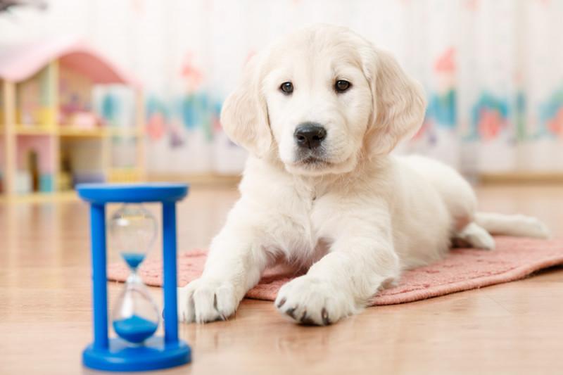 Come fare un repellente naturale per cani