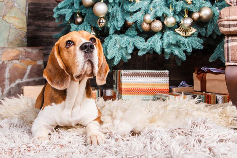 Come tenere il cane lontano dall'albero di Natale