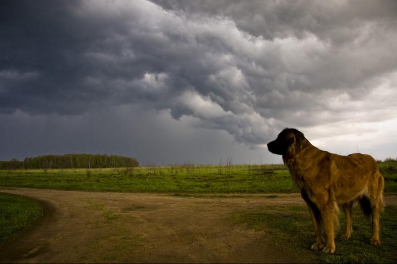 Come comportarsi quando il cane si agita durante il temporale