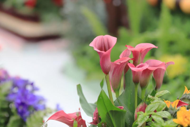 I fiori da piantare a inizio primavera