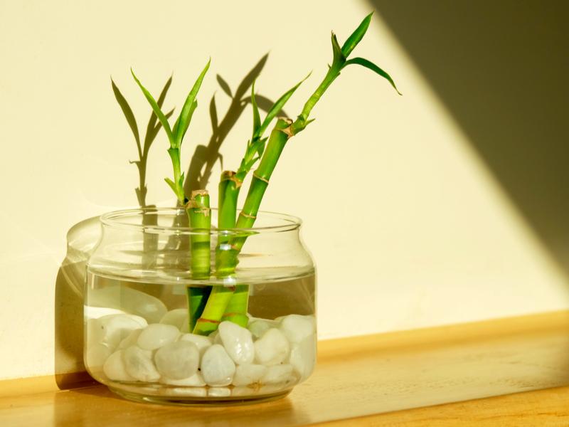 Idrocoltura: cosa serve per coltivare le piante in acqua