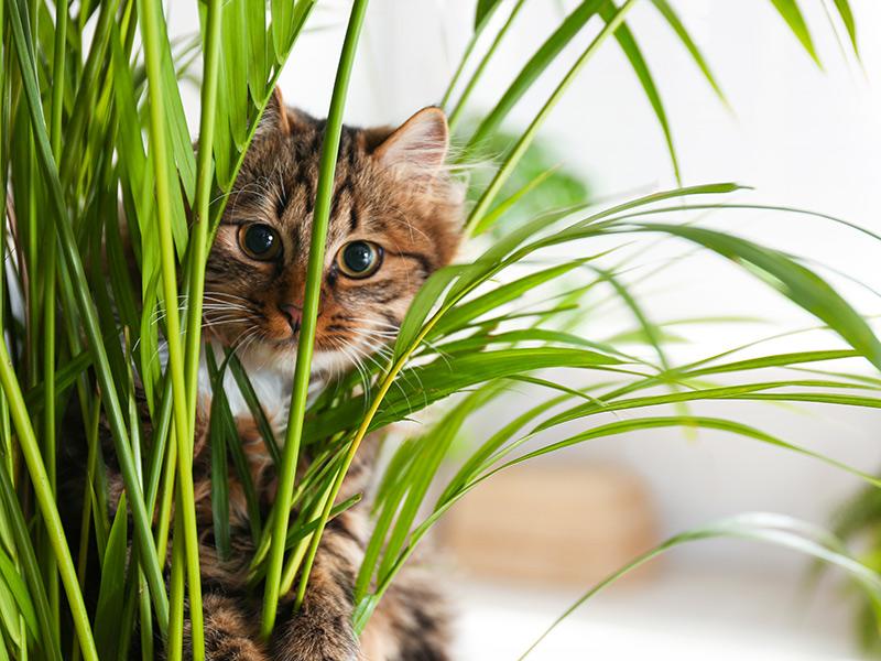 Come allontanare i gatti dalle piante