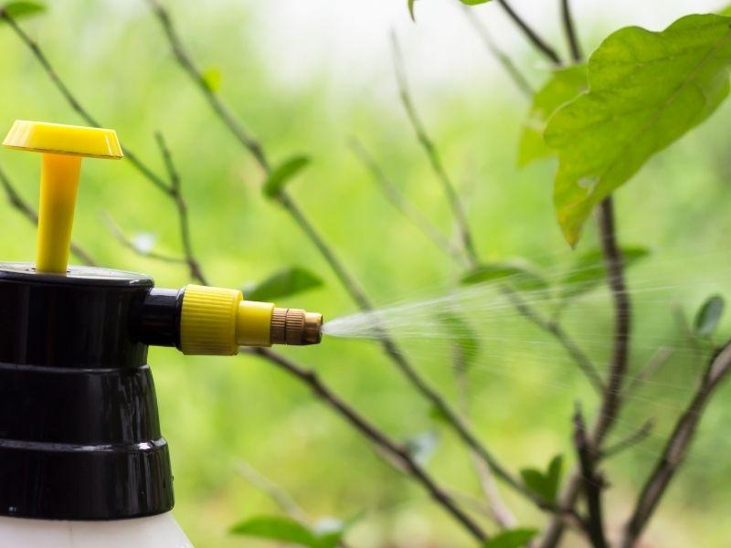 Come realizzare un insetticida naturale