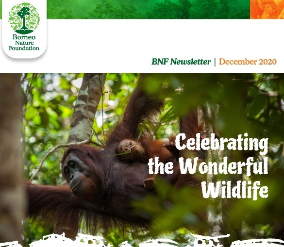 BNF Dec newsletter