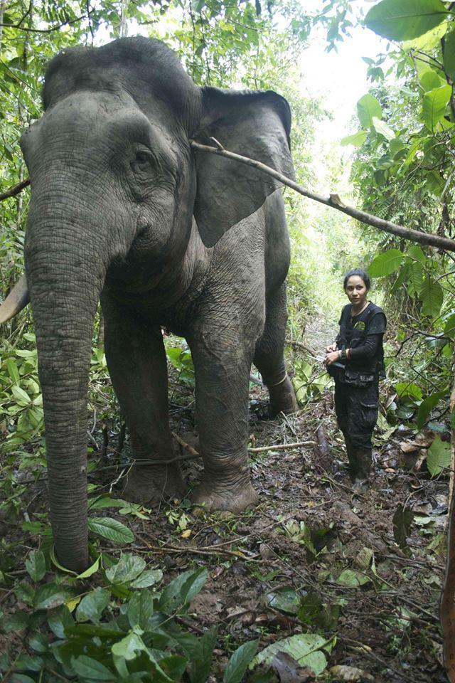 Dr Diana And Elephant