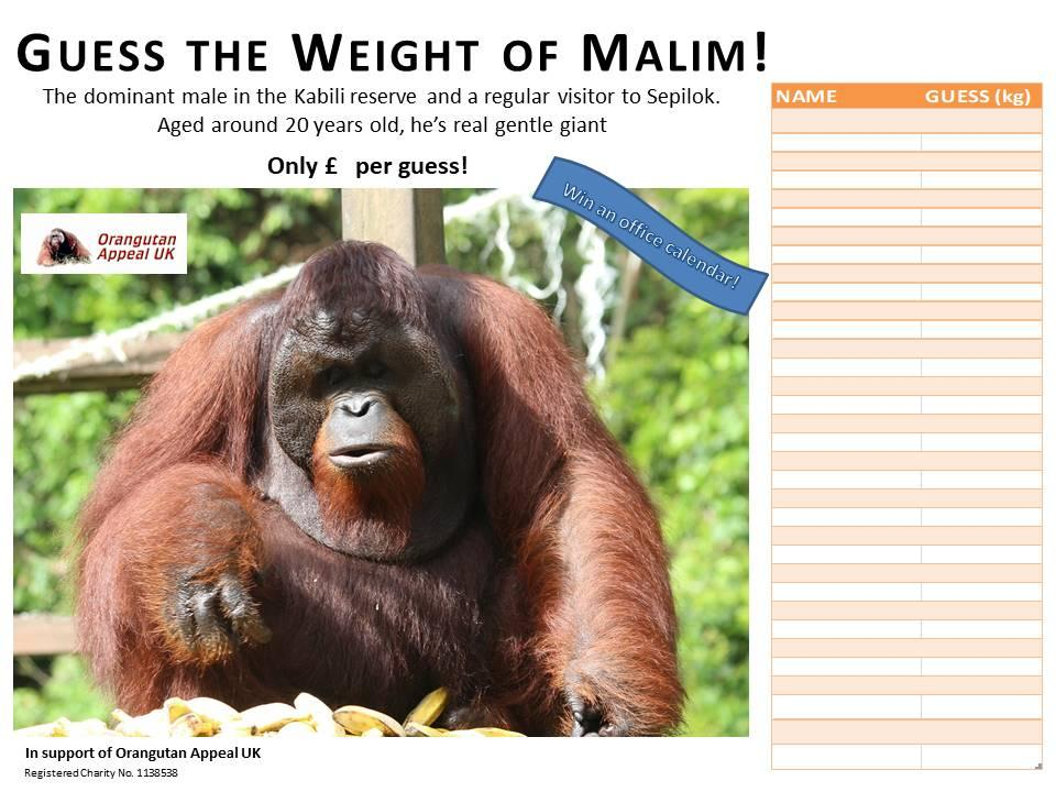 Guess The Weight Of Malim