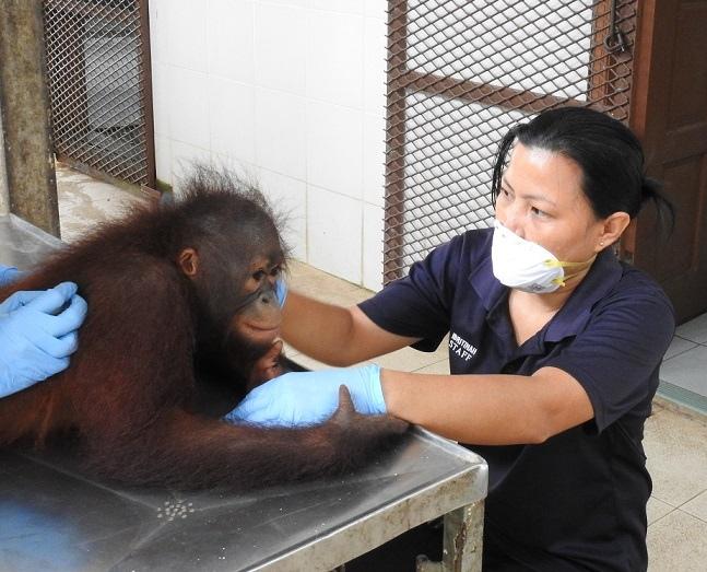 Ibri Doing Health Check