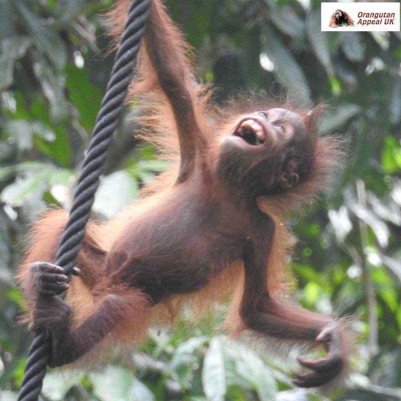 Mimi Baby Climbing