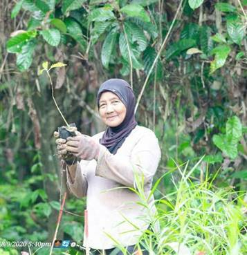 Regrow Borneo c