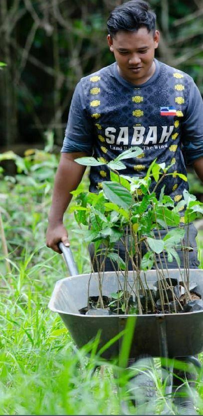Regrow Borneo Trees