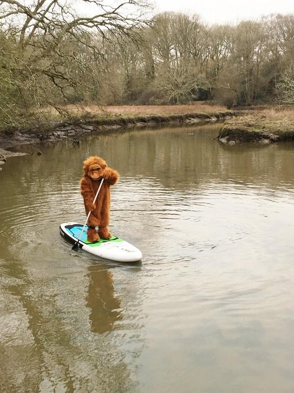 Small Orangutan Jennah On Paddle Board 02 2018 6