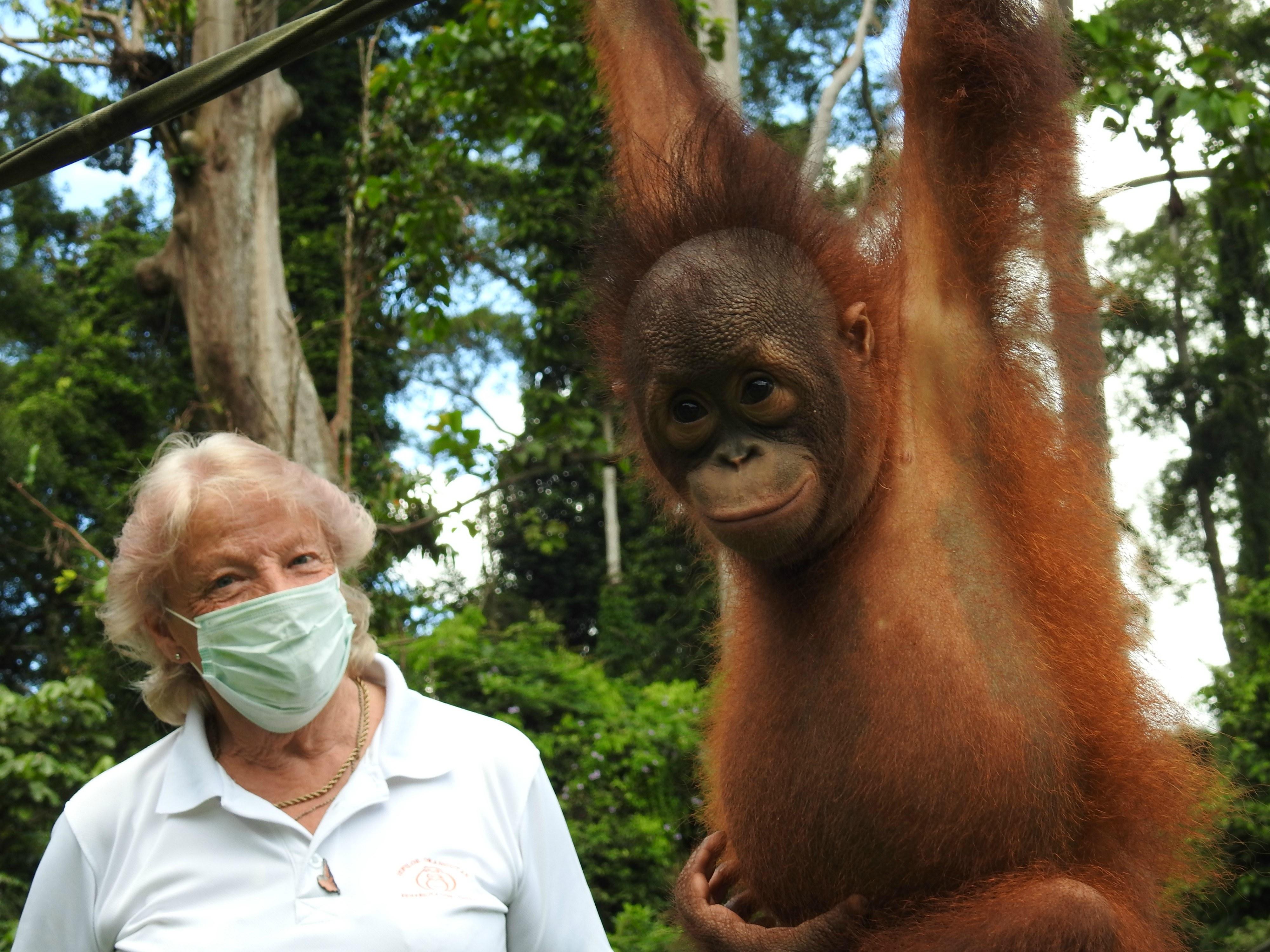 Sue Orangutan 2