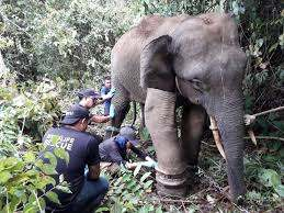 Wru Elephant Rescue