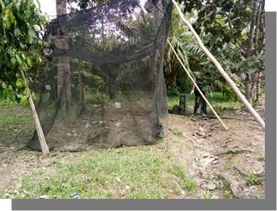 Wru Macaque