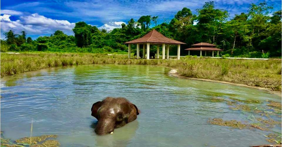 WRU Elephant having a swim
