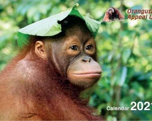 Calendar Fc2
