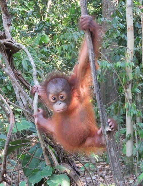 Archie Climbing