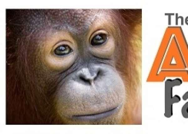 Ape Factor