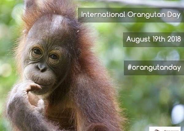 Orangutan Day Design Small