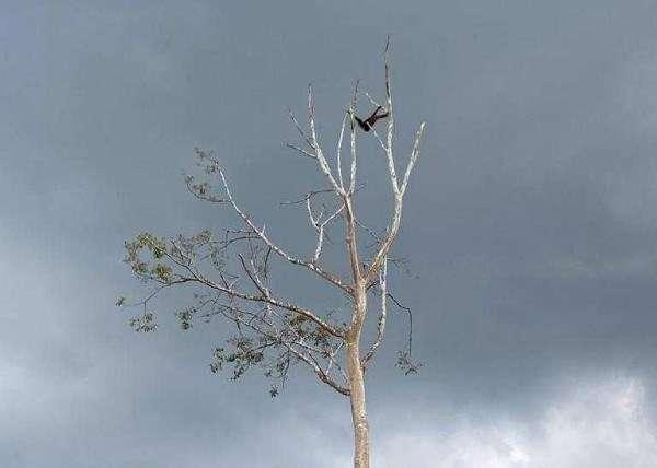 Sabah Wildlife Department'S Wildlife Rescue Unit Thumb