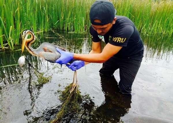Wru Rescuing Bird