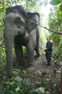 Dr Diana And Elephant