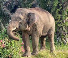 Elephant © Dr Sen Nathan