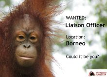 Liasion Officer Wanted