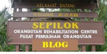 Sepilok Blog