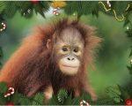 Yeesong Christmas Card