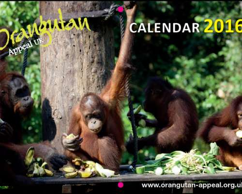 2016 Appeal calendar cover