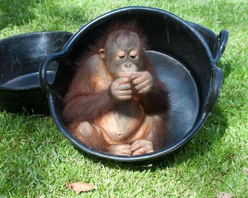 Enjoying The Bucket