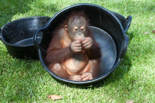 Enjoying The Bucket