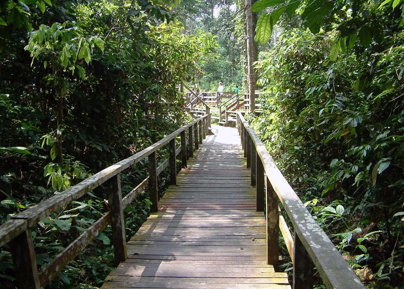 Walkway at Sepilok Orangutan Rehabilitation Centre ~ Sepilok, Sandakan: Sabah Borneo