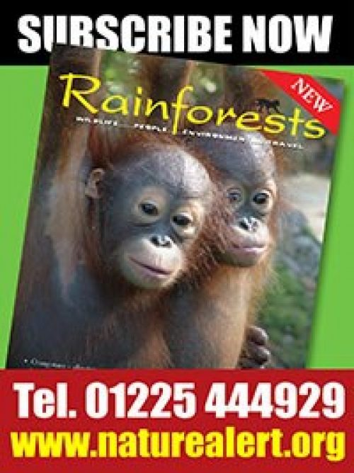 Rainforest Magazine