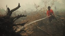 Fires destroy orangutan forest habitat