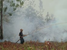 Putting out a forest fire