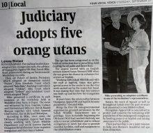 Daily Express Judicial Courts Adopt Orangutans 27 09 16  Copy